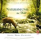 CD Natursinfonie im Wald: Instrumentale Hintergrundmusik zur Entspannung.