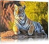 Pixxprint Stolzer Tiger Format: 120x80 auf Leinwand, XXL riesige Bilder fertig gerahmt mit Keilrahmen, Kunstdruck auf Wandbild mit Rahmen, günstiger als Gemälde oder Ölbild, kein Poster oder Plakat
