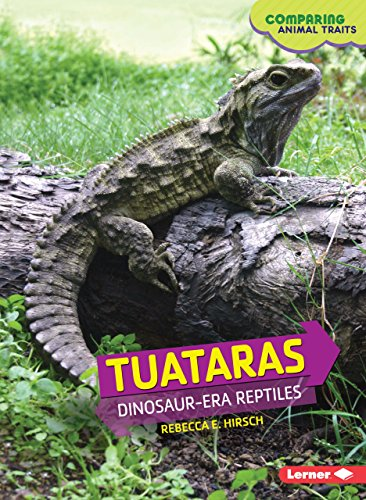 Tuataras: Dinosaur-Era Reptiles (Comparing Animal Traits) (Hirsche Blind)