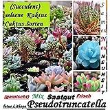 30x Suculenta Raro Cactus Semillas Plantas 2016 Cosecha 100% Rendimiento Mix mezclada Nuevo 2016 Planta nuevo 2016 Cosecha 100% rendimiento #104