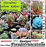 30x Succulentes Rare Cactus Graines Plantes 2016 Recolte/cueillette 100% Rendement Mix mixte Neuf 2016 Plant neuf 2016 Recolte/Cueillette 100% rendement #104