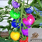 Rosepoem 100 stücke sehr selten importiert regenbogen tomatensamen bonsai obst & gemüse samen Non-gmo topfpflanzen für hausgarten
