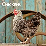 Chickens - Hühner 2019 - 18-Monatskalender (Wall-Kalender)