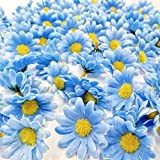 JZK® 100 piezas, 42 mm de diámetro, Artificial realista Margaritas de la margarita azul, Tela flores para la artesanía, Flores del arte, Margarita flor cabeza, Dos capas de pétalos. - Cada flor tiene Dos capas de pétalos. - Material: tela + p...