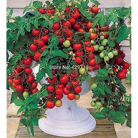 100 semi di pomodoro bonsai Mini Cherry