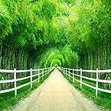 YiShuQiang Wallpaper Fototapeten Bambus-Waldzaun-Straßen-Wand-Aufkleber-Ausgangswand-Dekoration Wandbilder Wohnzimmer Schlafzimmer Büro Flur Dekoration Fototapetens