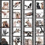 murando - PURO TAPETE - Realistische Tapete ohne Rapport und Versatz - Kein sich wiederholendes Muster - 10m Vlies Tapetenrolle - Wandtapete - modern design - Fototapete - Tiere Katze Hund Pferde Schwein Kaninchen g-C-0026-j-b