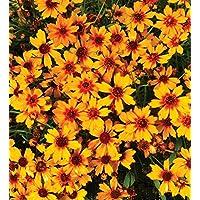 MF69 Schablone Wandschablone Blume Hibiskus Blüte Blätter