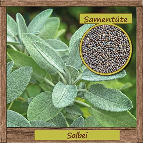 Samenliebe Salbei-Samen > 100 Samen hochwertige Kräuter-Samen - aus natürlichem Anbau - Herkunftsland: Deutschland