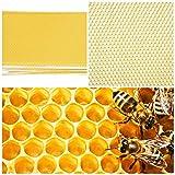 Yunjiadodo Honeycombღ Fond de Teint – 30 pièces pour Apiculture Abeilles Fond de Teint Feuille d'abeille Cadre Outil pour extracteur de Miel
