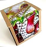Pflanz-Set für Fleischfressende Pflanzen (Karnivoren) Venusfliegenfalle, Schlauchpflanze,Sonnentau Kannenpflanze – 12 Sorten in einer Box - Geschenkset Box