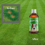Green Peez dog urine grass patch repair neutralises burn marks on lawn 8