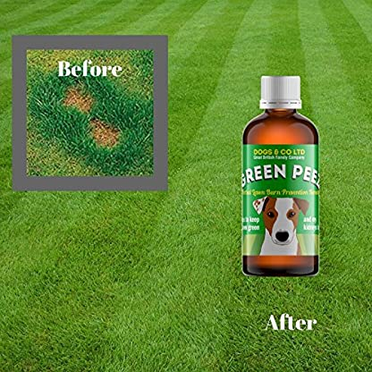 Green Peez dog urine grass patch repair neutralises burn marks on lawn 3
