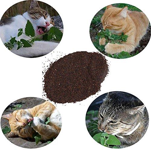 Korn Bronze (Etophigh Pet Cat Katzenminze Beutel 10 g (ca. 10000 Körner) Katzensnacks Minze Kräuter Minze Geschmack Spaß Katze liefert Katzengras)