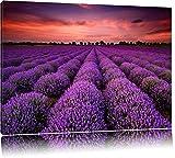 Wunderschöne Lavendel Provence Format: 80x60 auf Leinwand,