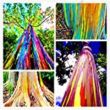 100pcs/bag seltene Regenbogen-Eukalyptus-Samen, Bonsai-Baum-Samen vergossen Hof Pflanze für Pflanze Hausgarten, einfach anzubauen