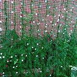GEZICHTA Mehrzweck-, Garten-Gitter Netz Schwere Garten Pflanzen Klettern Rahmen Fruit Tree Schutz Anti Pest Weed Geflügel Zucht Netz, Grün, Free Size