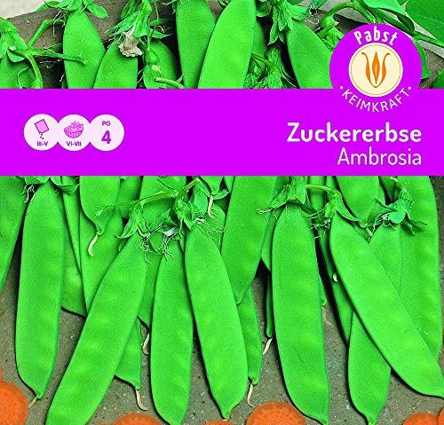 Carl Pabst 105230 Zuckererbse Ambrosia (Zuckererbsensamen)