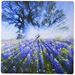 """Texas Bluebonnet flowers in bloom, central Texas, USA - US44 LDI0787 - Larry Ditto Mouse Pad is 8"""" x 8"""" x .25"""" and is made of heavy-duty recycled rubber. Matte finish image will not fade or peel. Machine washable using a mild detergent and air dry."""