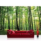 Vlies Fototapete 400x280 cm PREMIUM PLUS Wand Foto Tapete Wand Bild Vliestapete - Wald Tapete Bäume Wald Sonne Wiese grün - no. 528