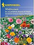 Wildblumenmischung mit Kräutern ein- und mehrjährige Mischung MEGA-PACK