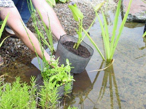 plantexr-pflanzbeutel-xxl-50-x-50-cm-3er-pack-fur-teichbepflanzungen-umpflanzen-und-uberwintern-von-