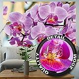 Fototapete Orchidee Lila Wandbild Dekoration Blumen Wellness Spa Blüten Natur Phalaenopsis Knabenkraut Orchid Blütenzweig | Foto-Tapete Wandtapete Fotoposter Wanddeko by GREAT ART (210 x 140 cm)