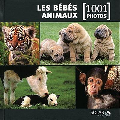 Les bébés animaux en 1001 photos NE