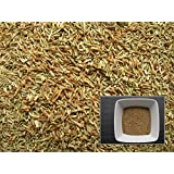 Tanaisie - 1000 graines - Tanacetum Vulgare - Tansy - (Engrais vert - Green manure)