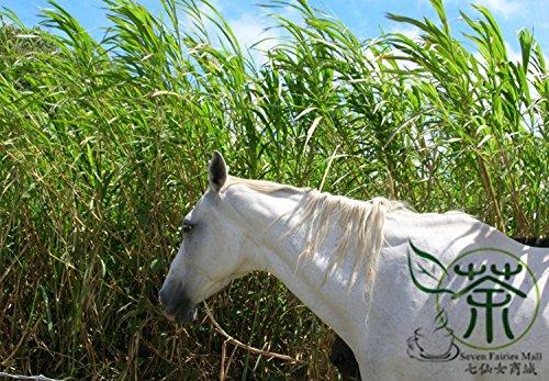 Shopmeeko ^^ Naturfutter Pennisetum Purpureum ^^ 200pcs / bag, mehrjährig hybridisiertes ugandisches Gras ^^, Familie Poaceae Elefantengras ^^ -