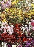 Tropica - Wildblumen - Nordamerika - Rocky Mountains (17 Sorten) - 1000 Samen