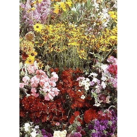 Tropica - fiori selvatici - Nord America