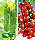 BALDUR-Garten Veredelte Snack-Gurke 'Minik' F1 &