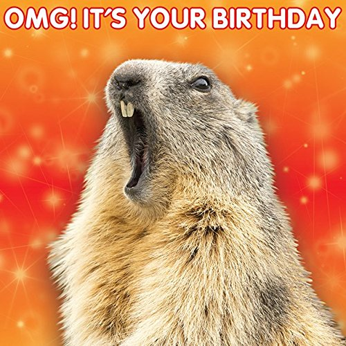 the-3d-collection-birthday-card-omg-its-your-birthday-marmot