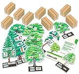 Betzold 755562 - Bäume bestimmmen leicht gemacht mit Holzaufstellern -
