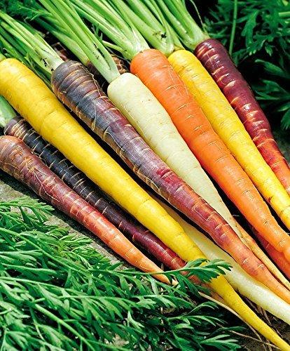 400 ZANAHORIAS Blend + Arco iris natural de 5 colores orgánicos no modificados genéticamente Semillas Gourmet