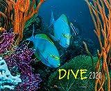 Dive 2020