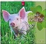 MF-Kalender Glücksschweine 2019