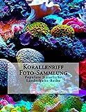 Korallenriff Foto-Sammlung: Populare Naturliche Landschafts-Reihe