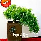 imballaggio originale bianche margherite semi nane Bellis perennis semi bonsai Partenio margherita fiori di crisantemo semi - 60 pezzi