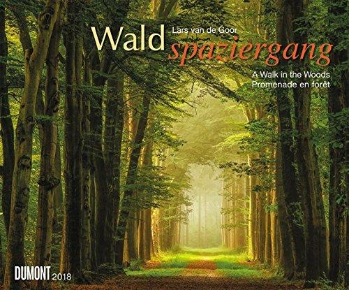 Waldspaziergang 2018 – Wandkalender 58,4 x 48,5 cm – Spiralbindung
