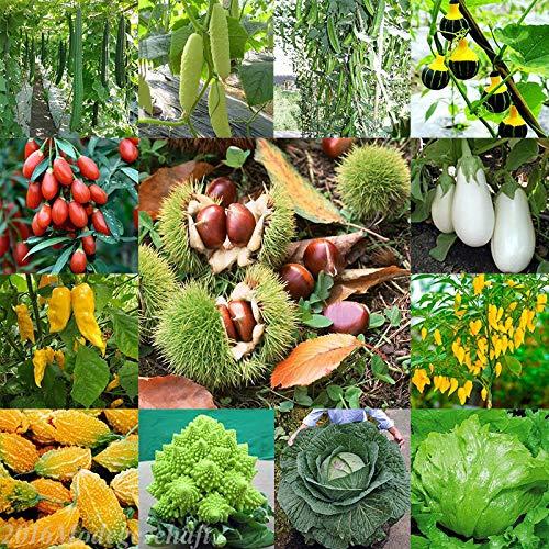 Portal Cool Lila Blumenkohl (20Pcs): 3-3000Pcs Großhandel Gemüse-Samen Gemüsegarten Hof Dekor Seed Fs