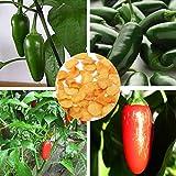 Paleo 30pcs semillas de pimiento jalapeño orgánicos chile mexicano