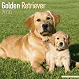 Golden Retriever Calendar 2018 (Square)