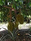 #3: M-Tech Gardens Rare Dwarf Sweet