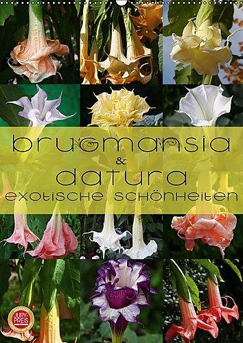 brugmansia-datura-exotische-schonheiten-wandkalender-2017-din-a2-hoch-brugmansia-datura-exotische-ku