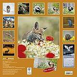 Wald & Flur 2019 - Naturkalender, Tierkalender, Landschaftskalender 2019 - 30 x 30 cm -