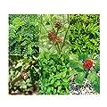 Chinesische Heilkräuter' von Magic Garden Seeds bei Du und dein Garten