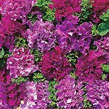 Ncient 200 Semi Sementi di Petunia Doppi Petali Fiore Cascata Semi di Fiori Rari Pianta Profumati per Orto Giardino Balcone Interni ed Esterni
