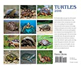 Image de Turtles 2016 Calendar